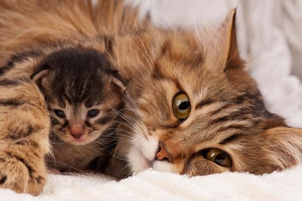 Kate mit Baby