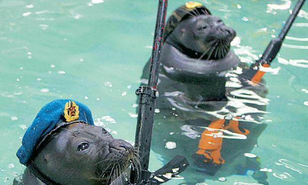 Armee der Robben